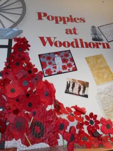 Y6 Display Woodhorn 2