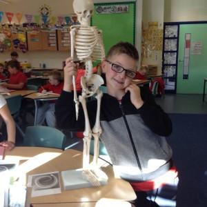 science skeletons kitti (1)