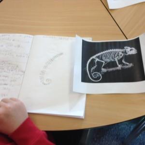 science skeletons kitti (7)