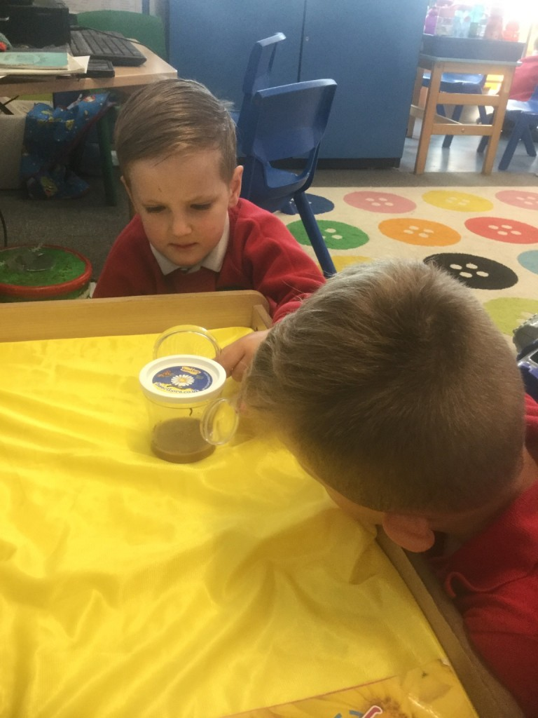 Looking very carefully at our new baby caterpillars.